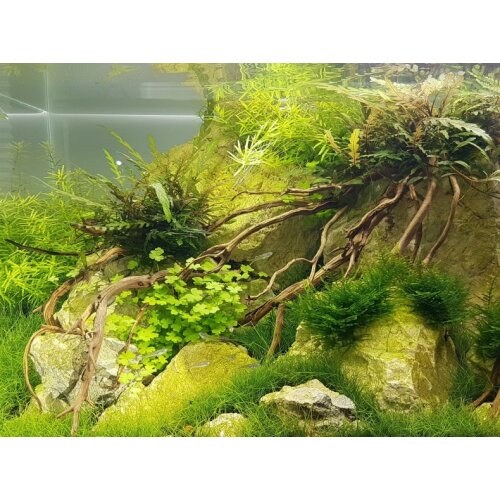daytime onex100 - 93,5cm plant