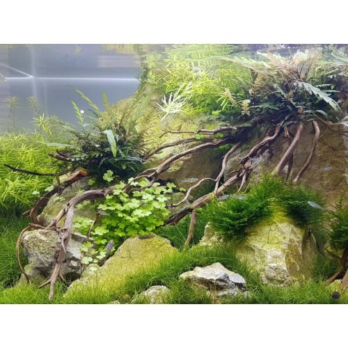 daytime onex130 - 123,5cm fresh